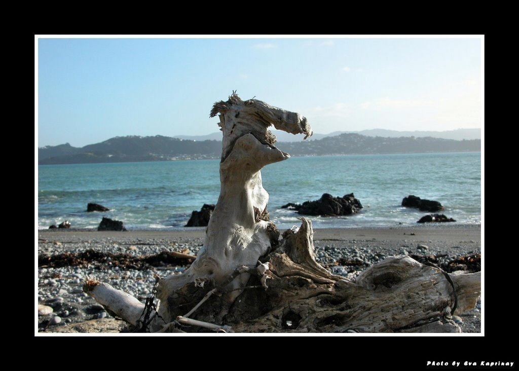 Only a driftwood -laughing