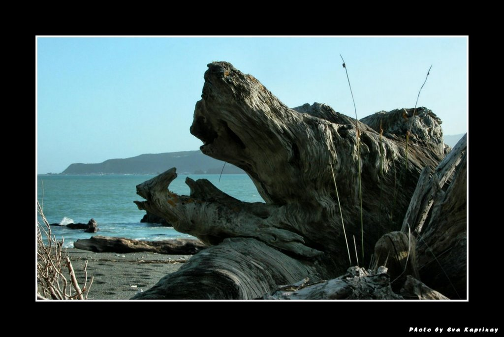 Only a driftwood - yawning