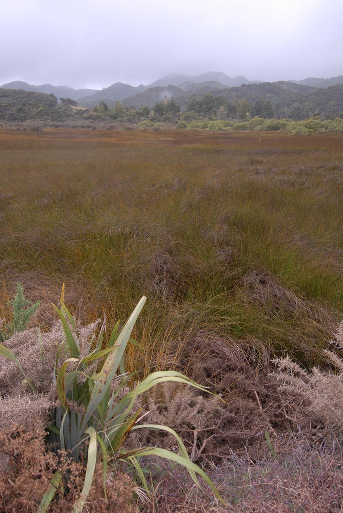 Grass, Flax and Bush, near Kawakawa