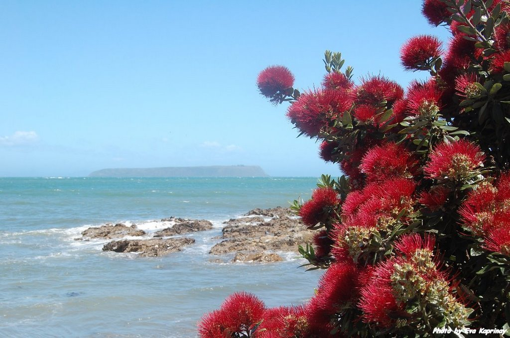 View and pohutukawa
