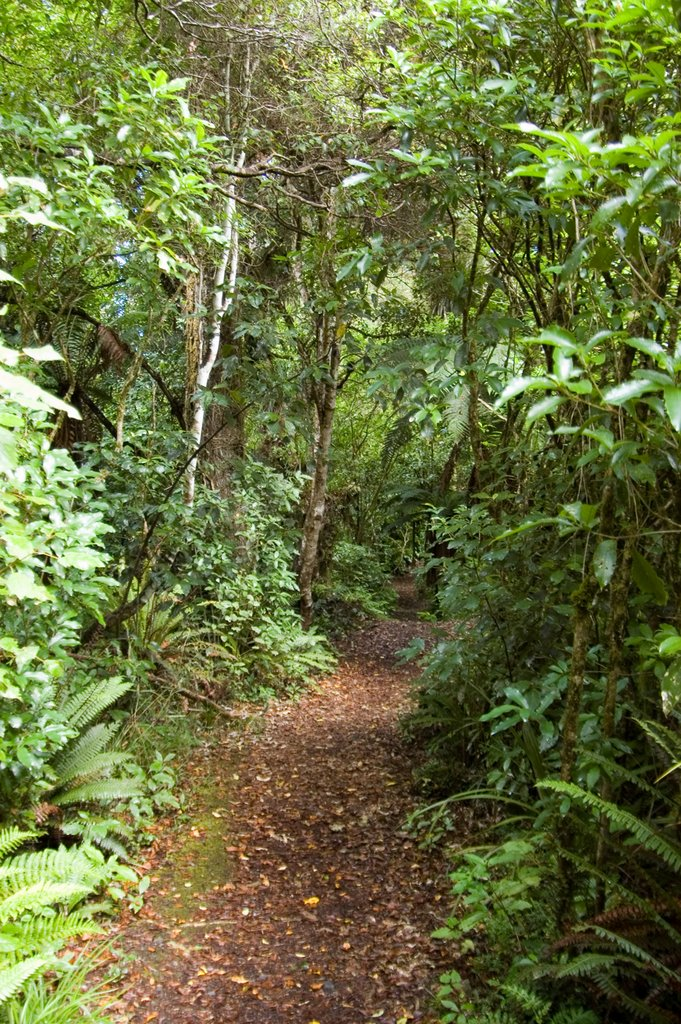 Mangawhero Forest Walk