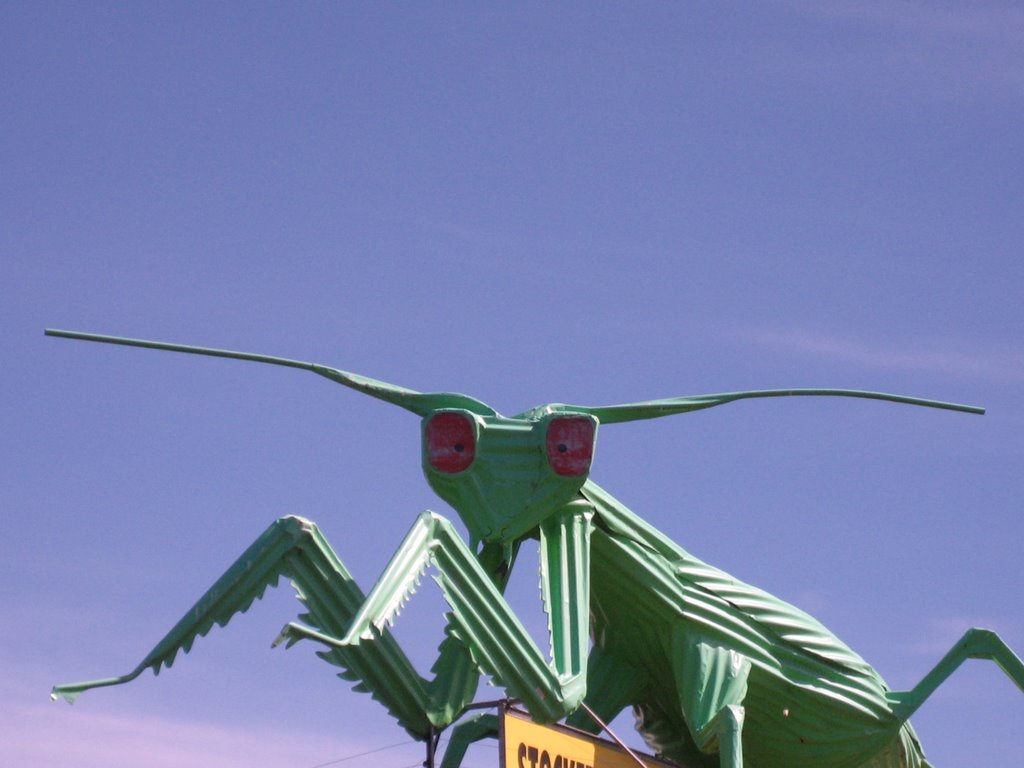 Ultimate corrugated art - a larger than life praying mantis