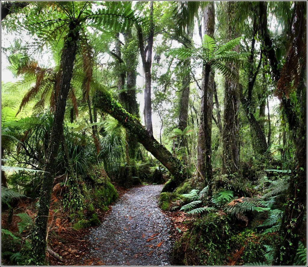 # 52 Forest near Bruce Bay. -  New Zealand.