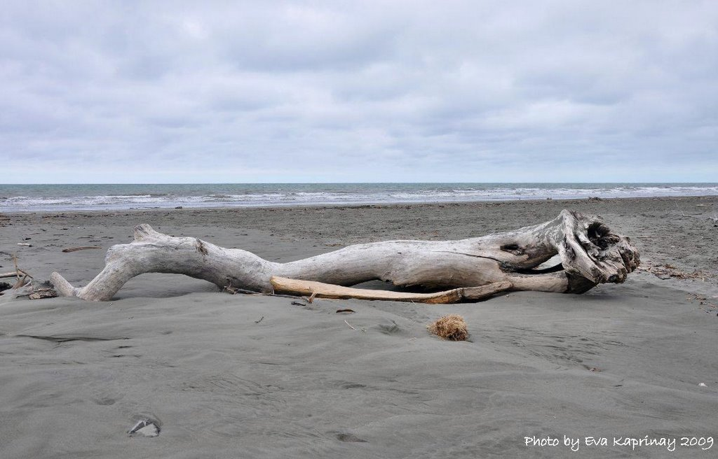 Only a driftwood