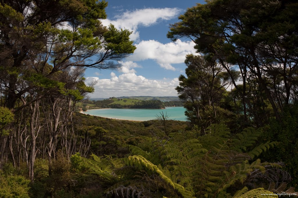 New Zealand - Weiheke Island