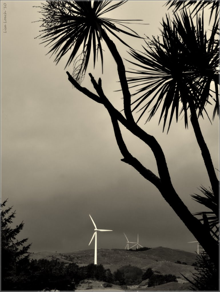 #23 - Tararua Wind Turbine. 2010 Feb NPC