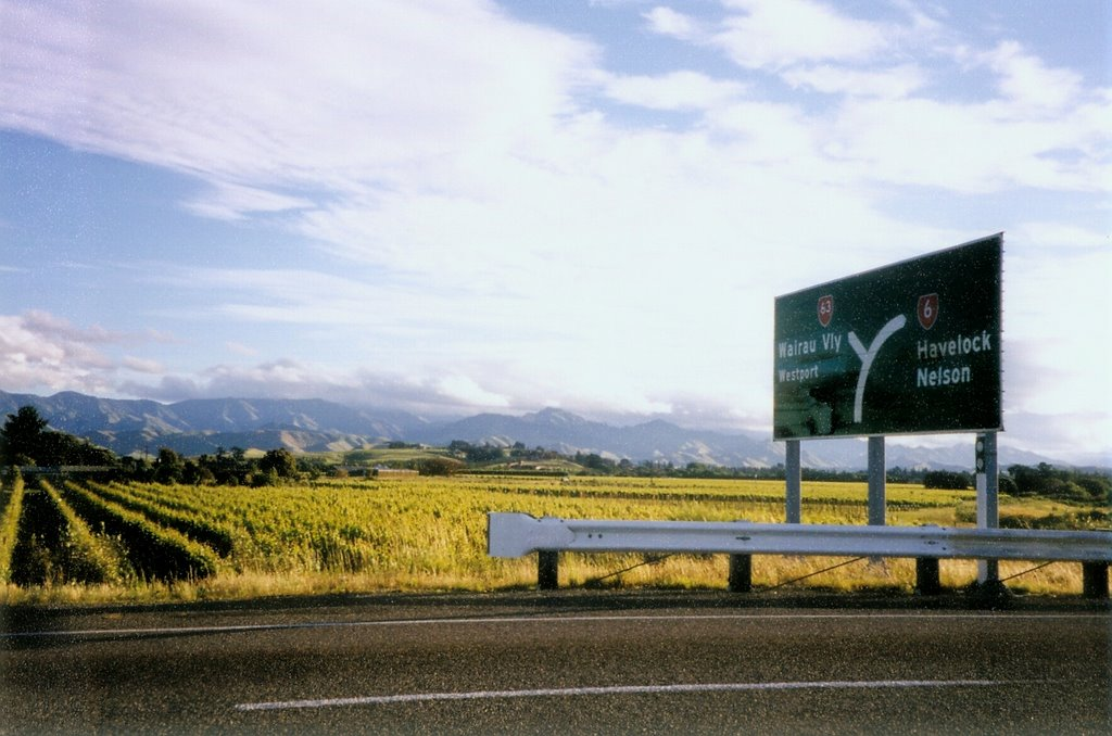 Marlborough Vineyards - From State Highway 6 near Renwick looking toward HighField Estate Winery in the Wairau Valley.