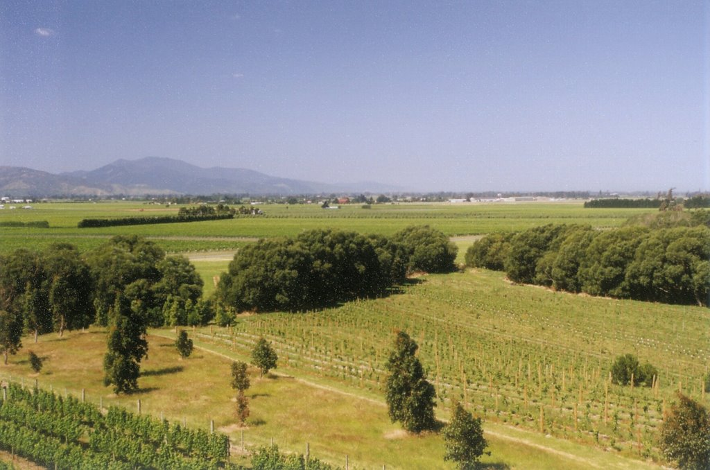 Wairau Valley - Overlooking the Wairau Valley vineyards from the tower at the Highfield Estate Winery near Renwick.