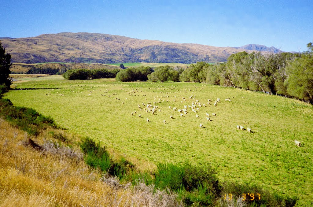 Sheep-run, Acton, South Island, New Zealand 1997