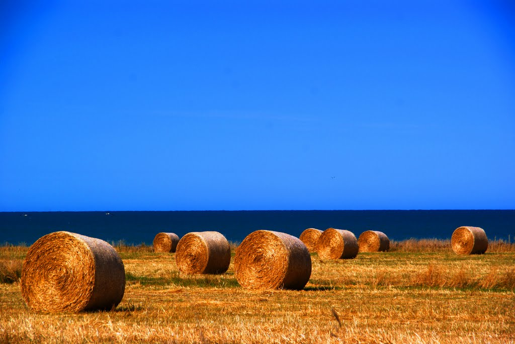Round straw bales near the ocean in Saint Andrews