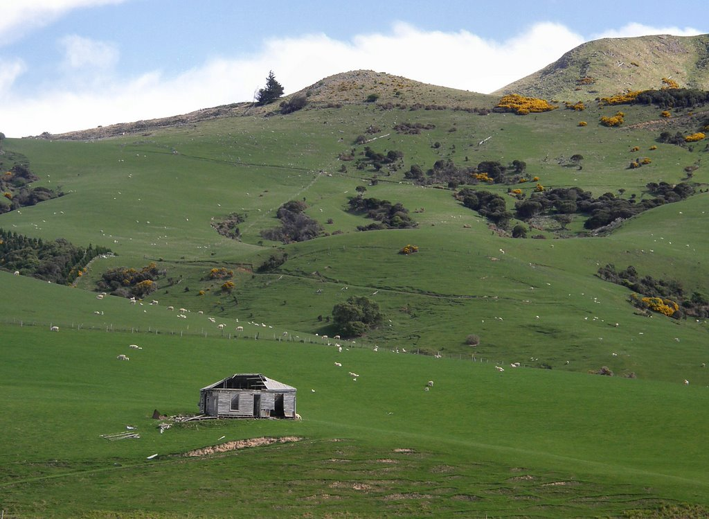 New Zealand hillside
