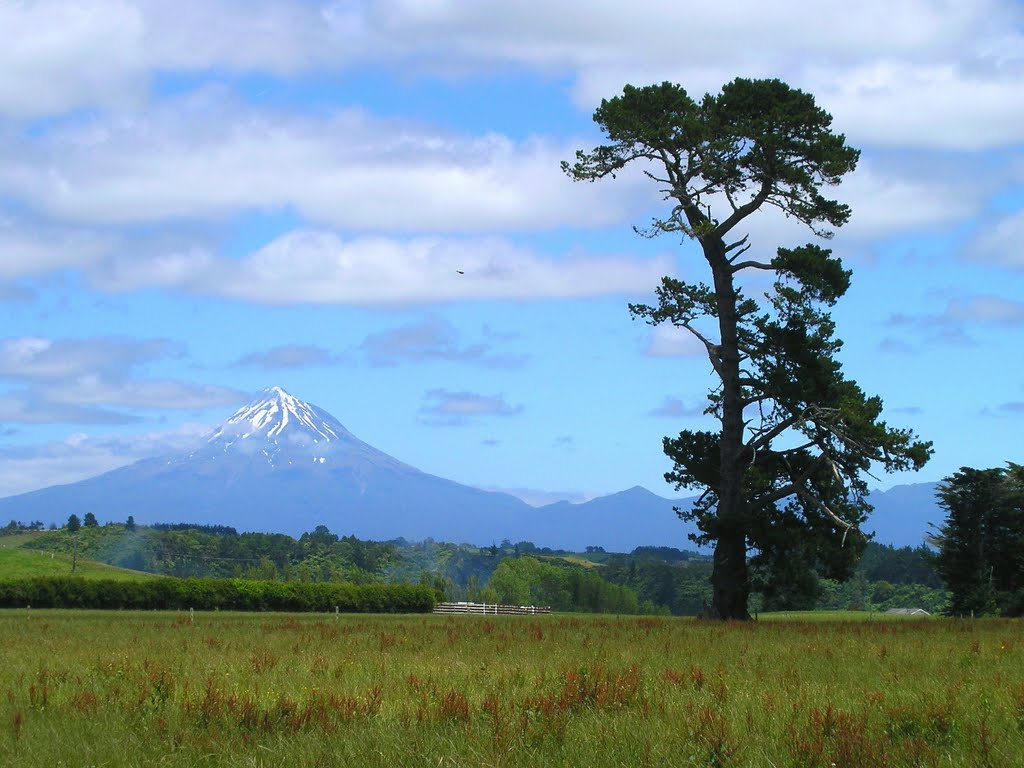 Going from Onearo to Mt. Taranaki (Mt. Egmont) - side road near Tikorangi