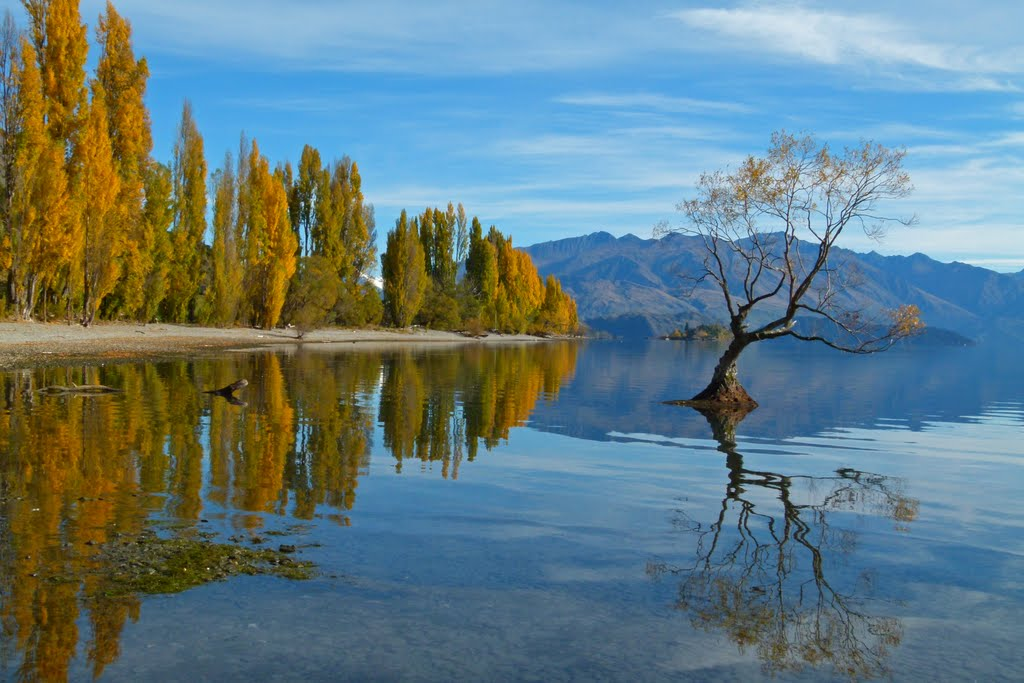 Autumn Colours, Lake Wanaka, South Island of New Zealand