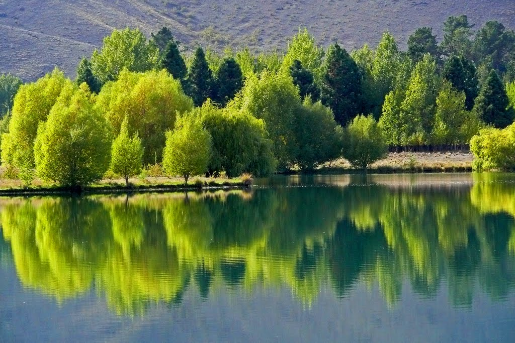 Reflections, Wairepo Arm, Lake Ruataniwa,Twizel, Otago, New Zealand