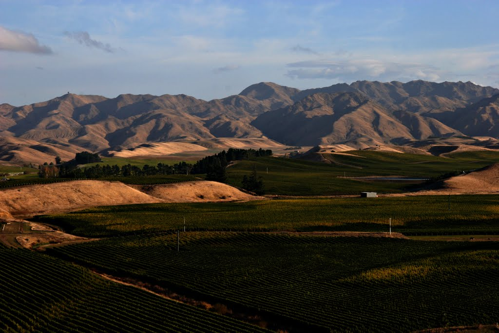 Awatere Valley is filling with Vineyards