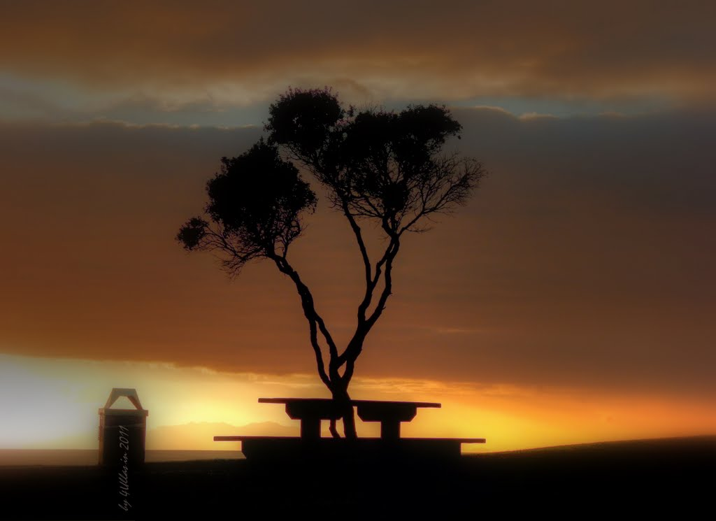 Tree and table by sunrise at Orewa, North Island in New Zealand