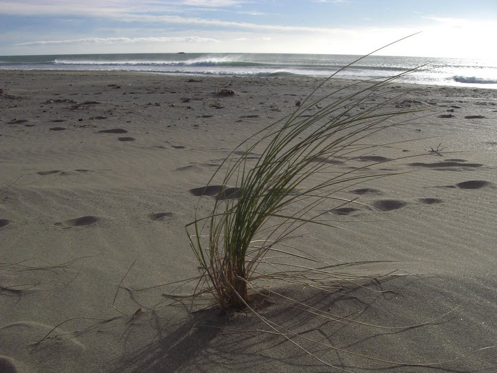 Riversdale Beach Tussock Grass