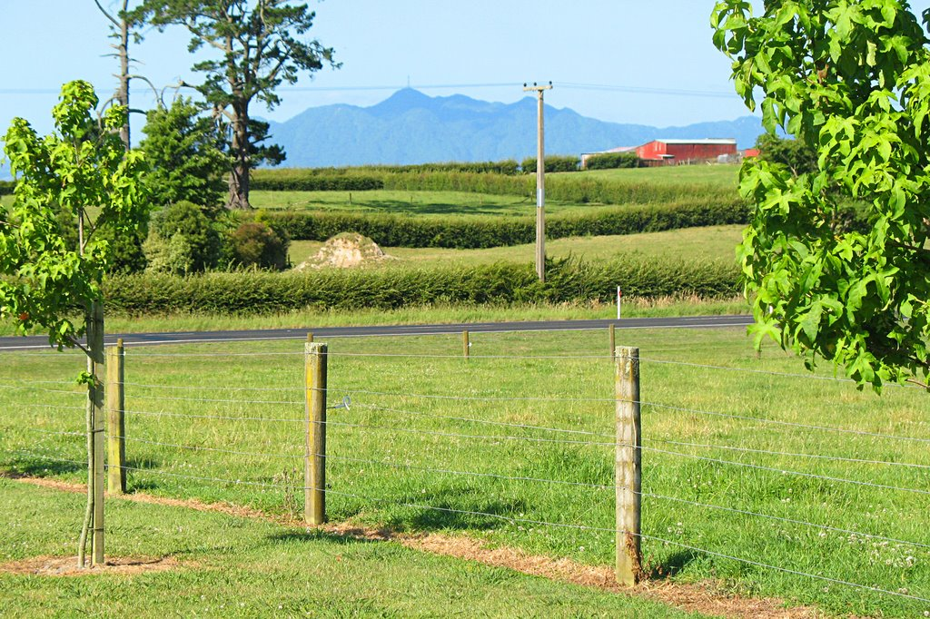 Looking towards Mt. Te Aroha