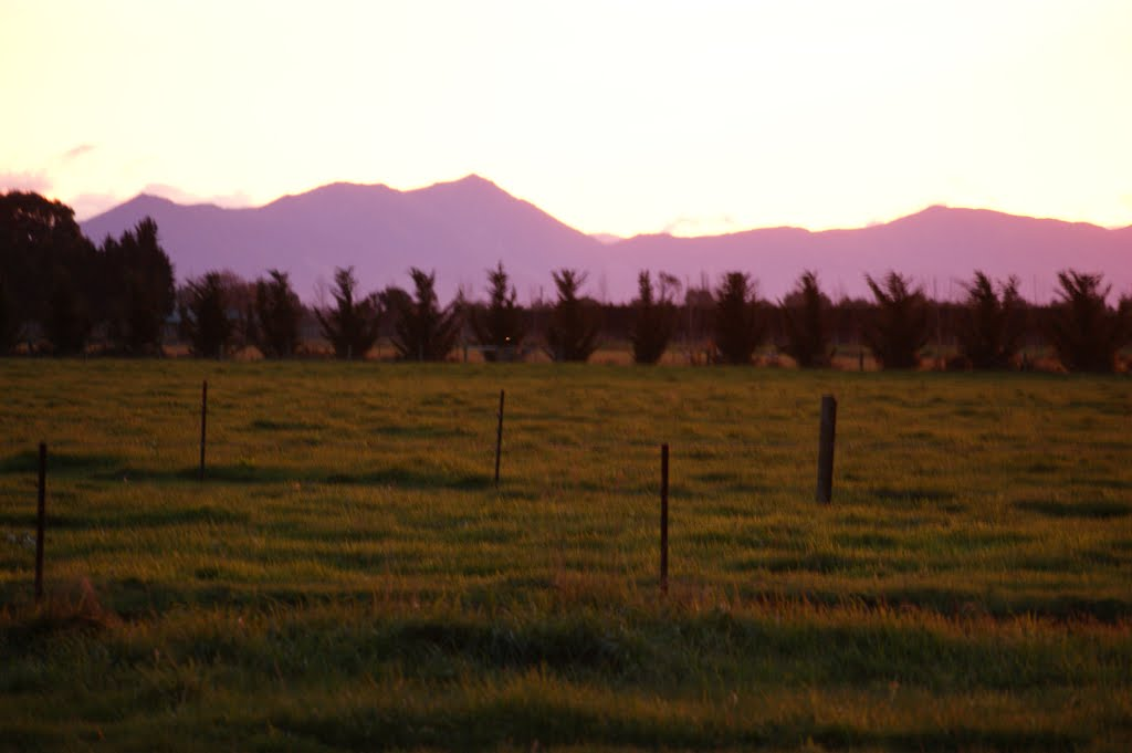 2011  Dusk Willowby, Ashburton